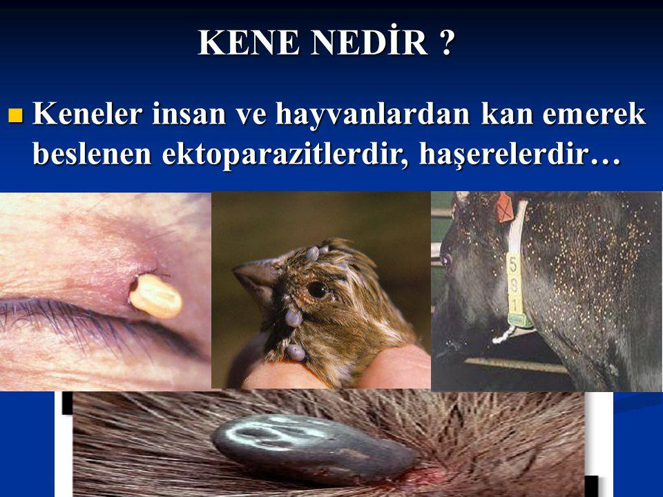 KENE NEDİR Keneler insan ve hayvanlardan kan emerek beslenen ektoparazitlerdir, haşerelerdir…