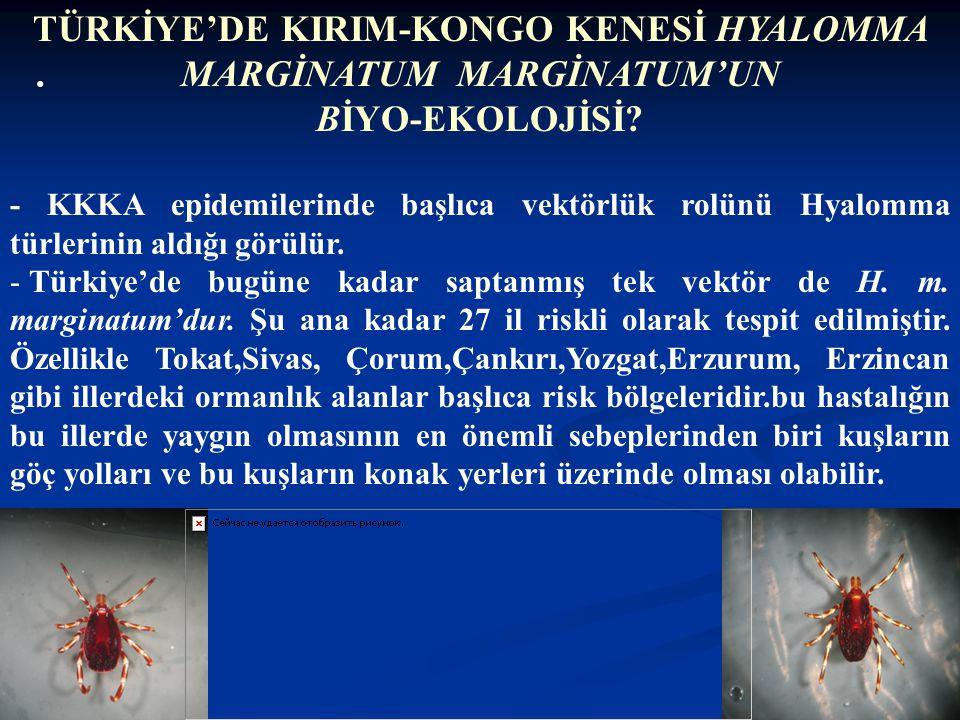TÜRKİYE'DE KIRIM-KONGO KENESİ HYALOMMA MARGİNATUM MARGİNATUM'UN