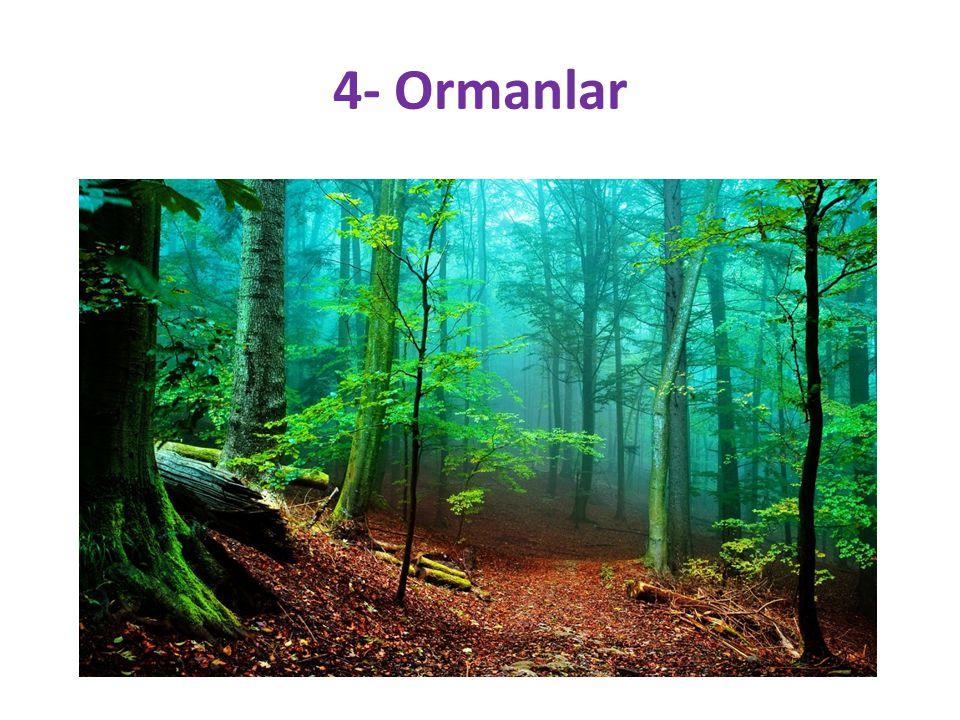 4- Ormanlar