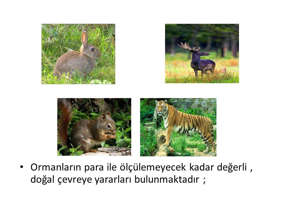 Ormanların para ile ölçülemeyecek kadar değerli , doğal çevreye yararları bulunmaktadır ;