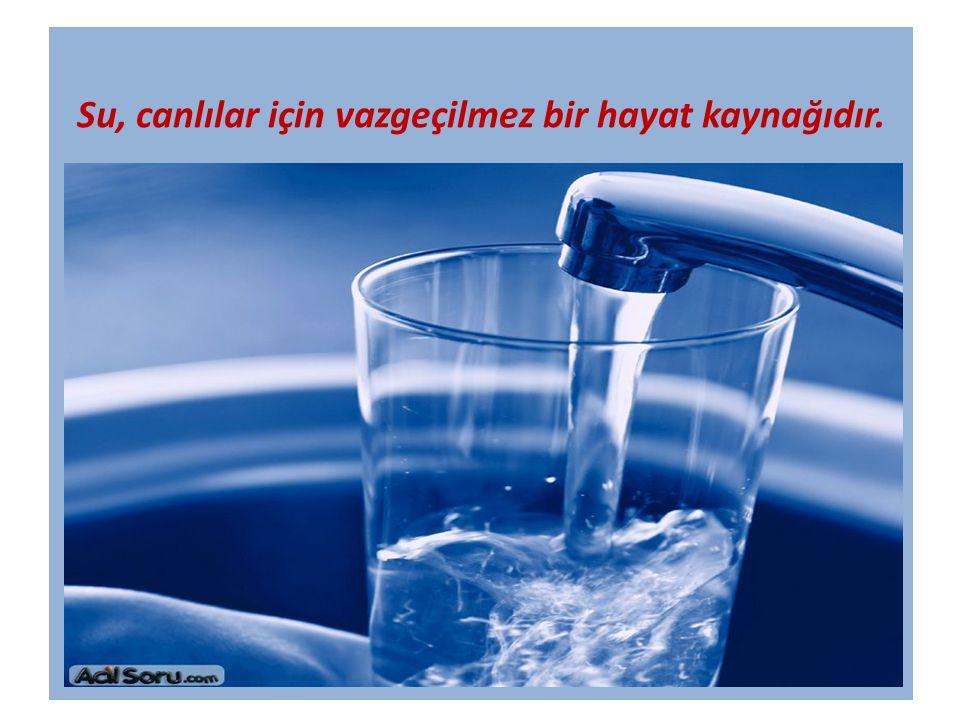Su, canlılar için vazgeçilmez bir hayat kaynağıdır.