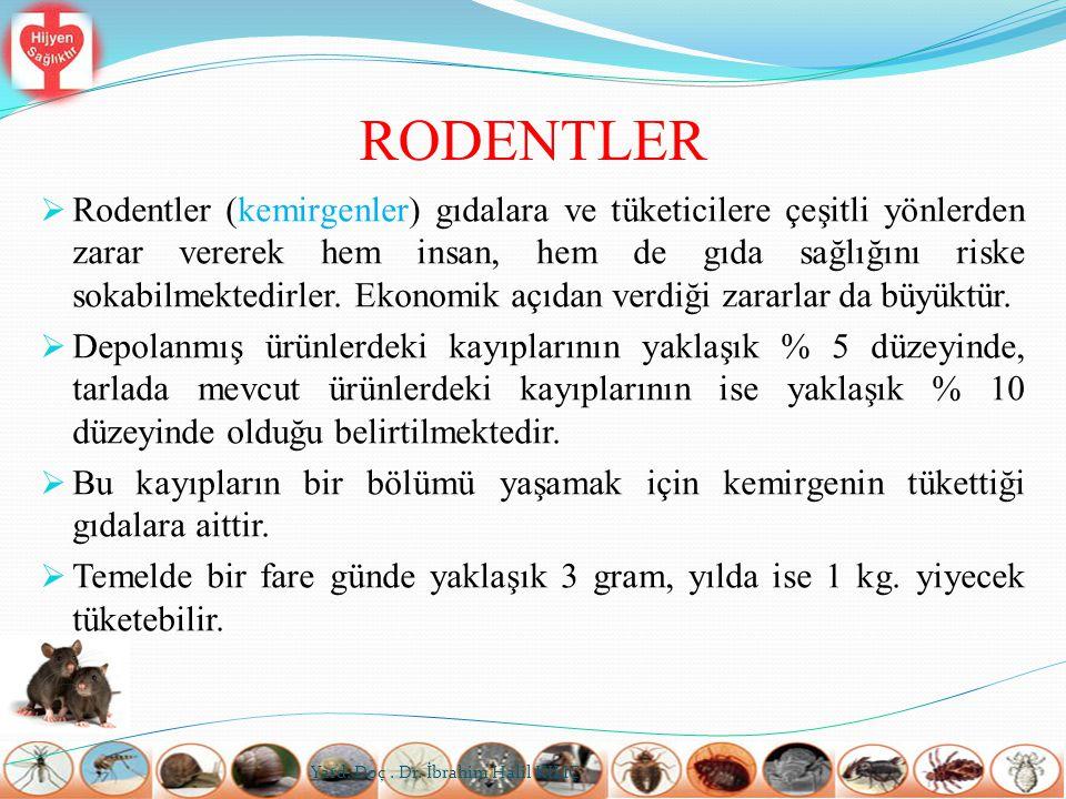 RODENTLER