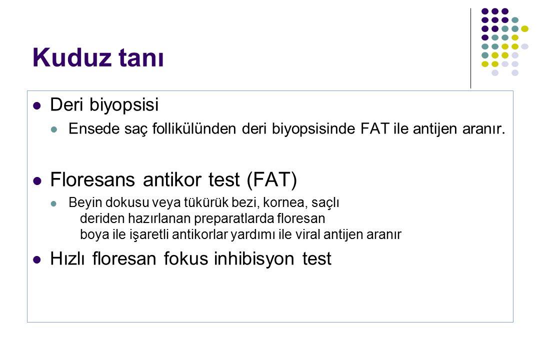 Kuduz tanı Floresans antikor test (FAT) Deri biyopsisi