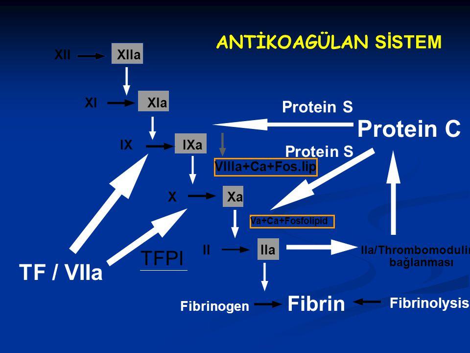 Protein C TF / VIIa TFPI ANTİKOAGÜLAN SİSTEM Protein S Fibrinolysis