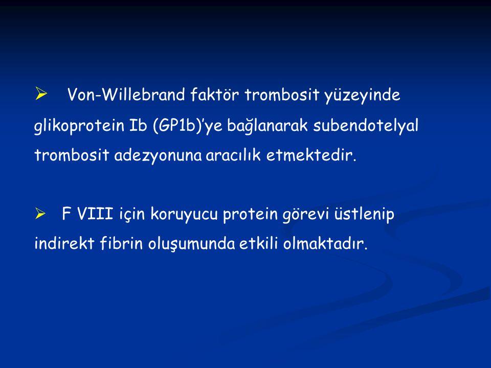 Von-Willebrand faktör trombosit yüzeyinde glikoprotein Ib (GP1b)'ye bağlanarak subendotelyal trombosit adezyonuna aracılık etmektedir.