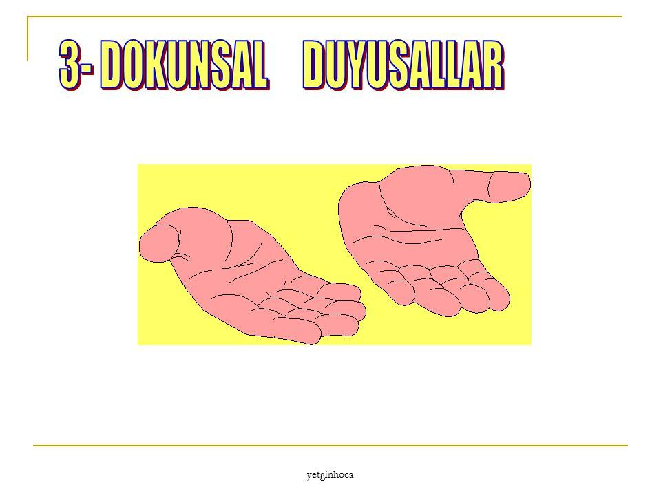 3- DOKUNSAL DUYUSALLAR yetginhoca