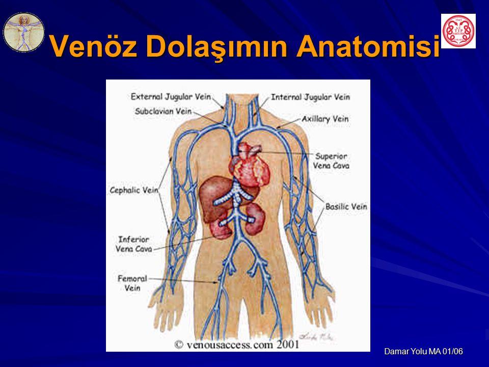 Venöz Dolaşımın Anatomisi