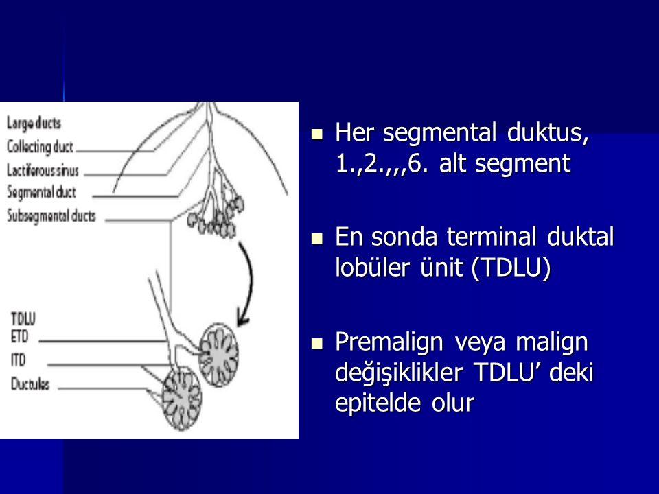 Her segmental duktus, 1.,2.,,,6. alt segment