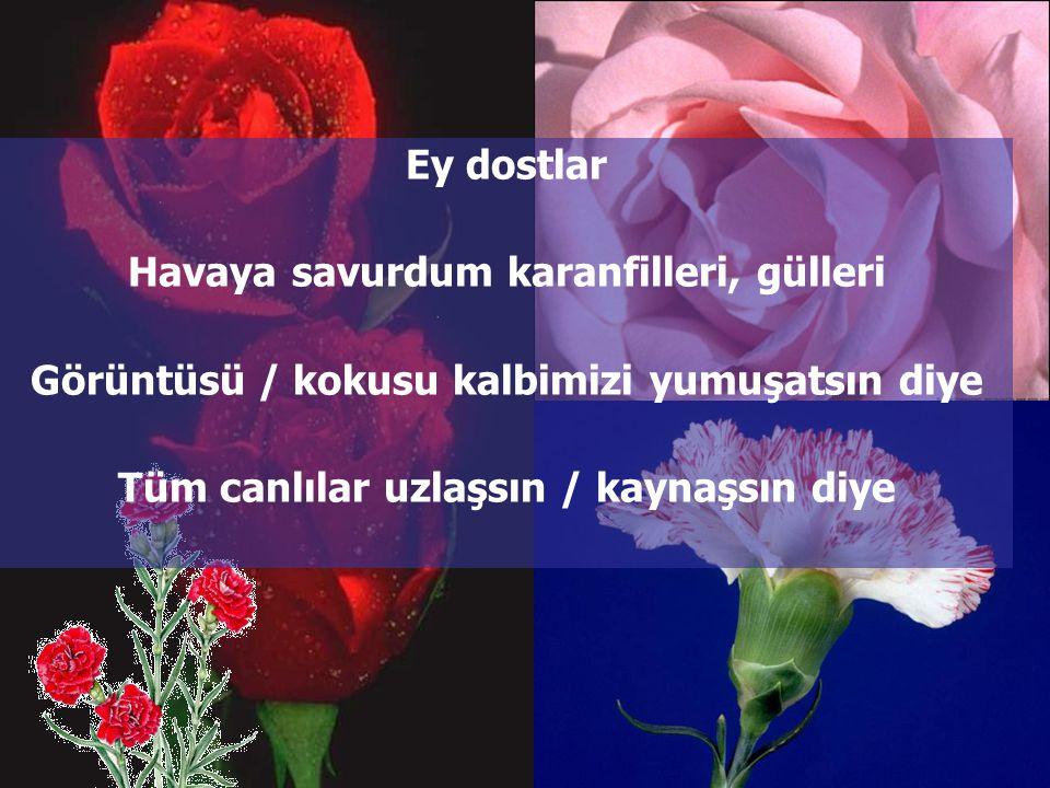 Havaya savurdum karanfilleri, gülleri