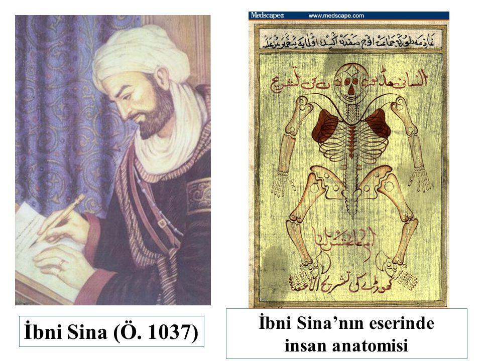 İbni Sina'nın eserinde