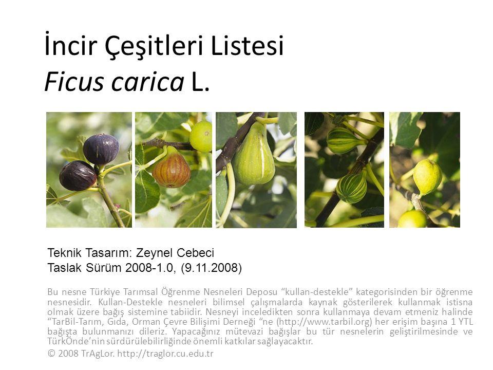 İncir Çeşitleri Listesi Ficus carica L.