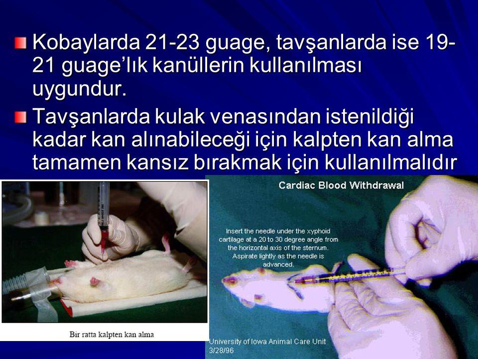 Kobaylarda 21-23 guage, tavşanlarda ise 19-21 guage'lık kanüllerin kullanılması uygundur.