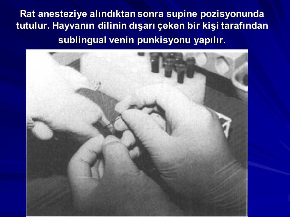 Rat anesteziye alındıktan sonra supine pozisyonunda tutulur