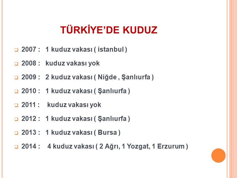 TÜRKİYE'DE KUDUZ 2007 : 1 kuduz vakası ( istanbul )