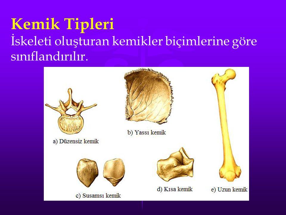 Kemik Tipleri İskeleti oluşturan kemikler biçimlerine göre sınıflandırılır.