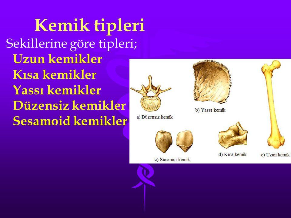 Kemik tipleri Sekillerine göre tipleri; Uzun kemikler Kısa kemikler