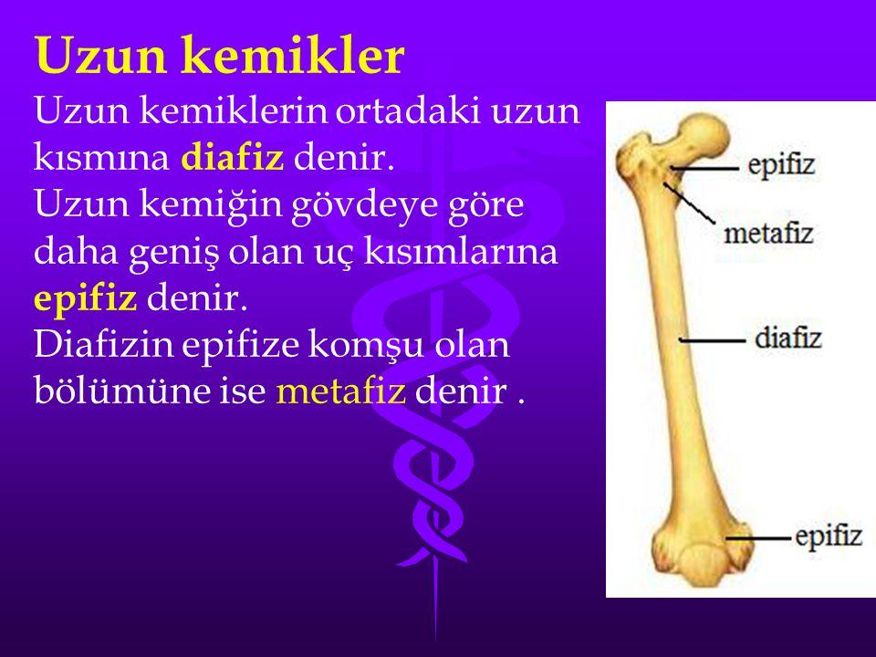 Uzun kemikler Uzun kemiklerin ortadaki uzun kısmına diafiz denir.