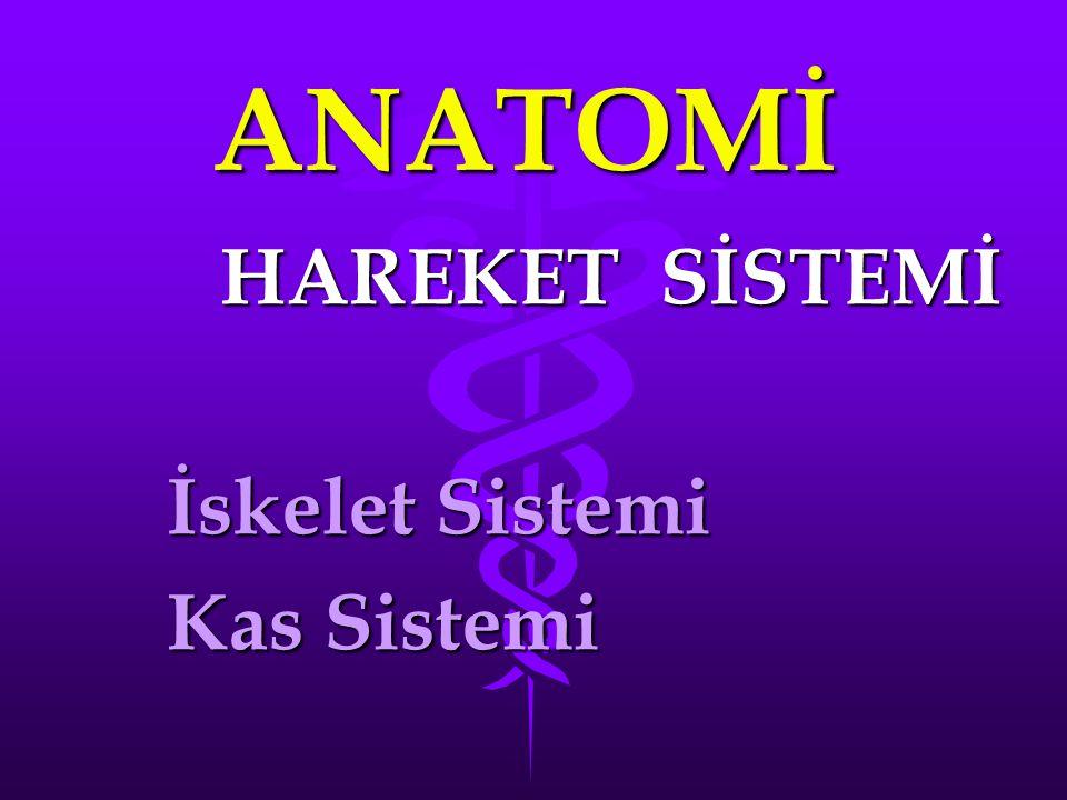 HAREKET SİSTEMİ İskelet Sistemi Kas Sistemi