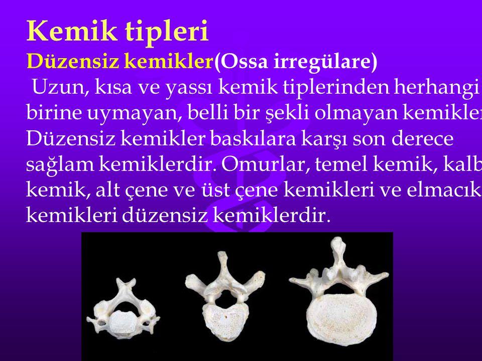 Kemik tipleri Düzensiz kemikler(Ossa irregülare)