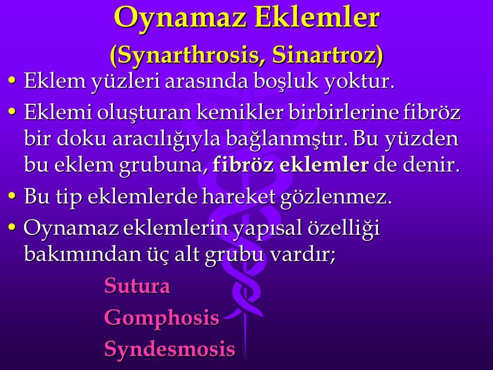Oynamaz Eklemler (Synarthrosis, Sinartroz)