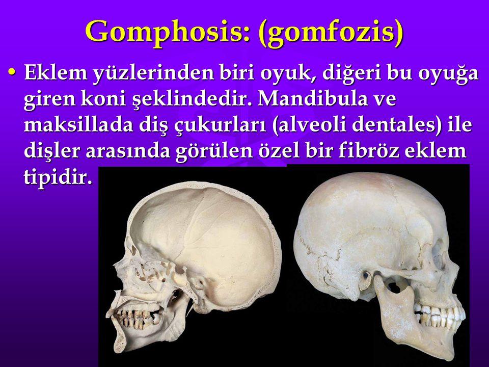 Gomphosis: (gomfozis)