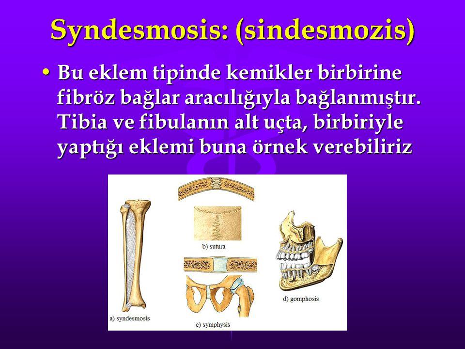 Syndesmosis: (sindesmozis)