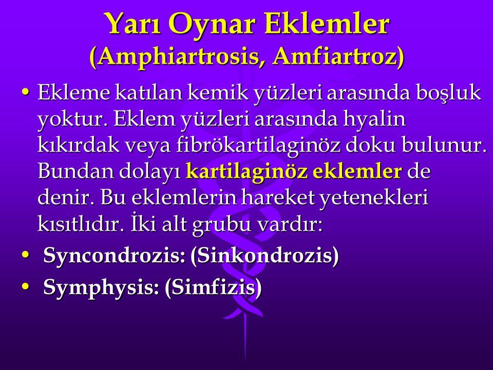 Yarı Oynar Eklemler (Amphiartrosis, Amfiartroz)