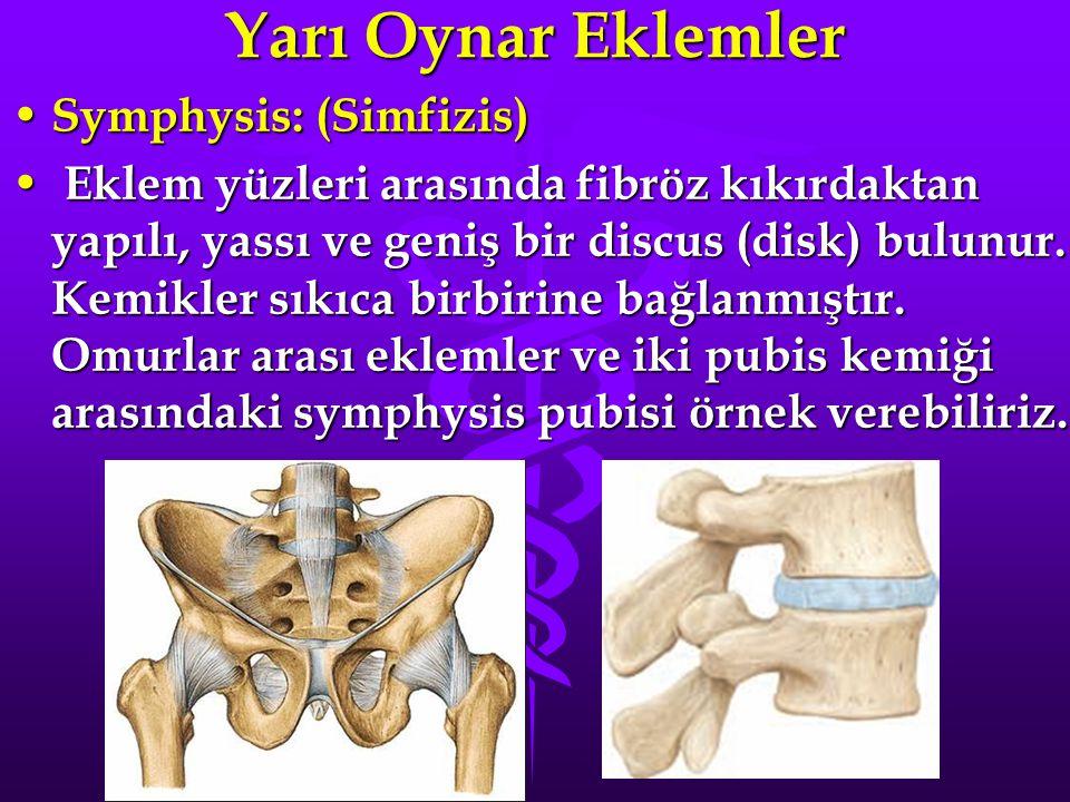 Yarı Oynar Eklemler Symphysis: (Simfizis)