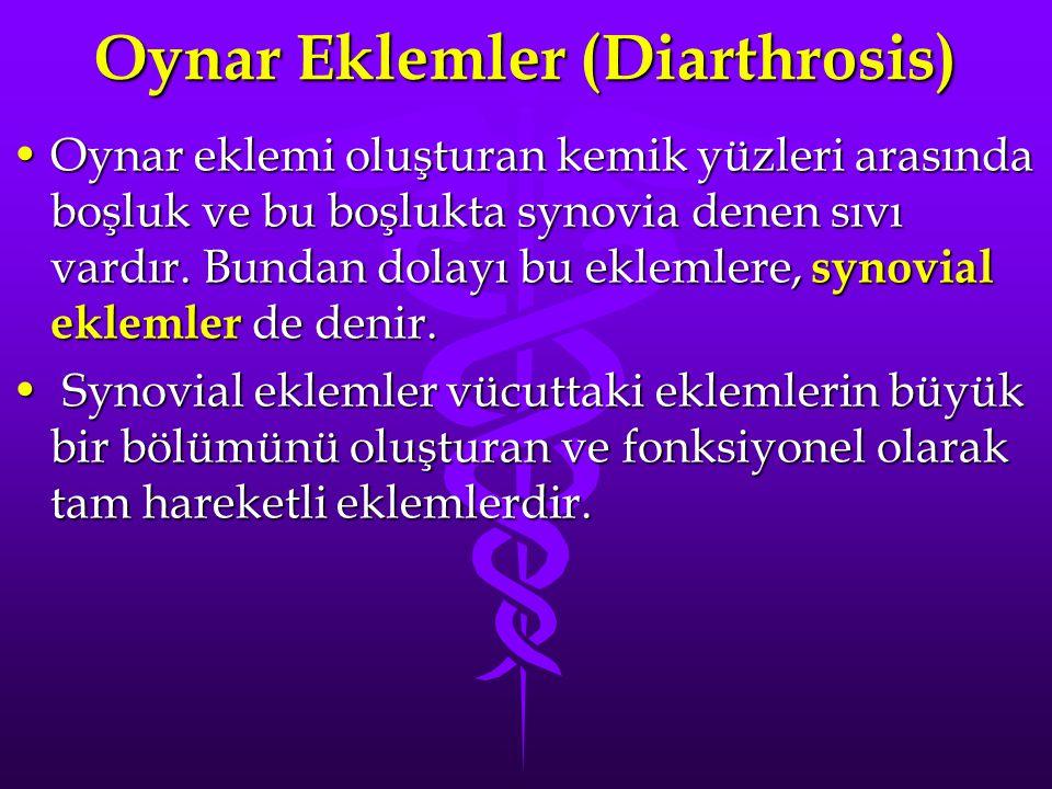 Oynar Eklemler (Diarthrosis)