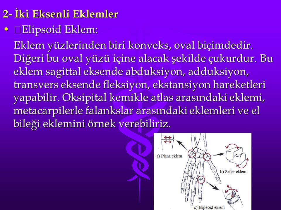 2- İki Eksenli Eklemler Elipsoid Eklem: