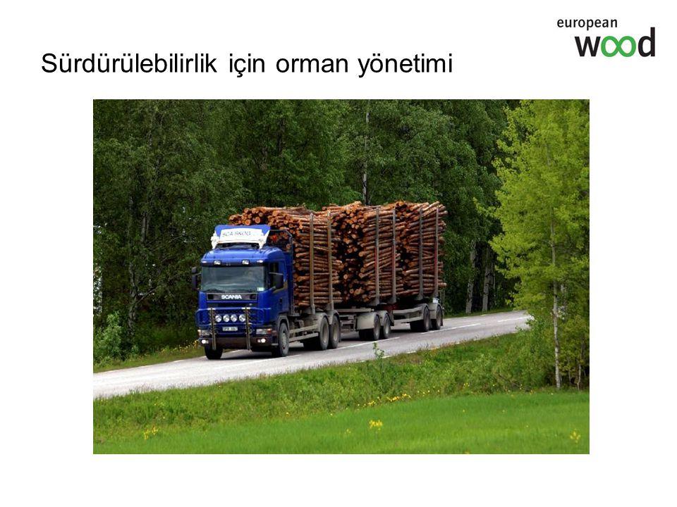 Sürdürülebilirlik için orman yönetimi