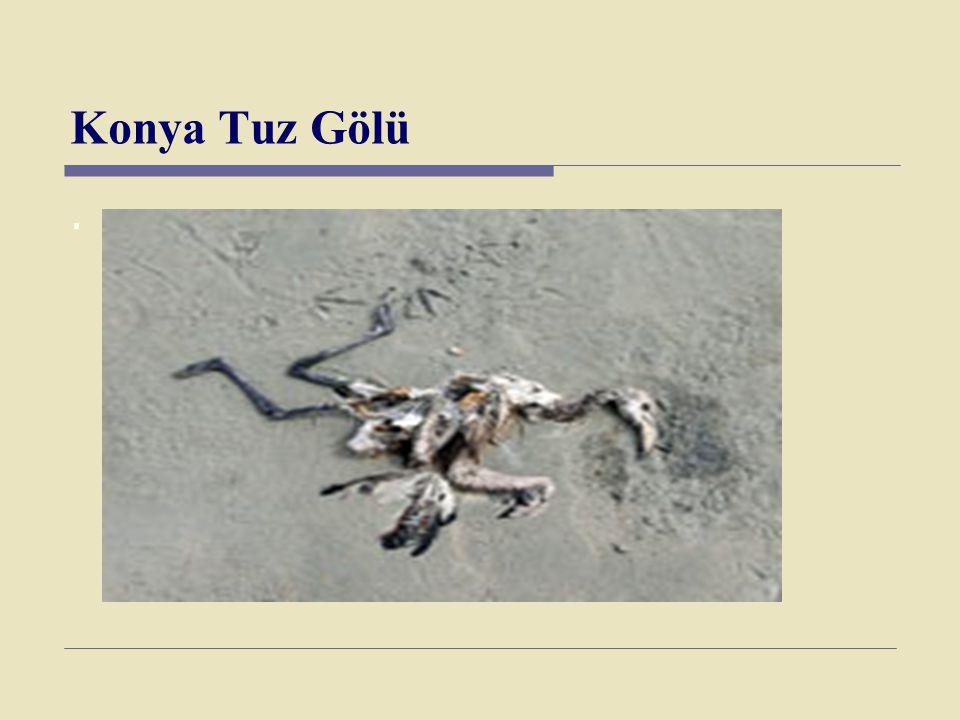 Konya Tuz Gölü .