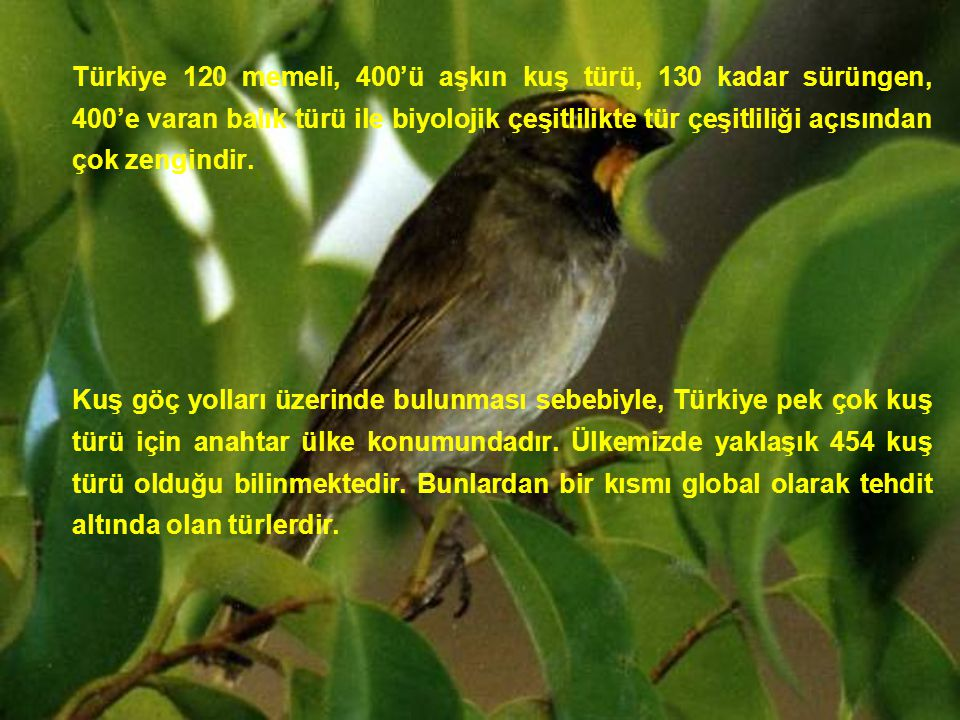 Türkiye 120 memeli, 400'ü aşkın kuş türü, 130 kadar sürüngen, 400'e varan balık türü ile biyolojik çeşitlilikte tür çeşitliliği açısından çok zengindir.