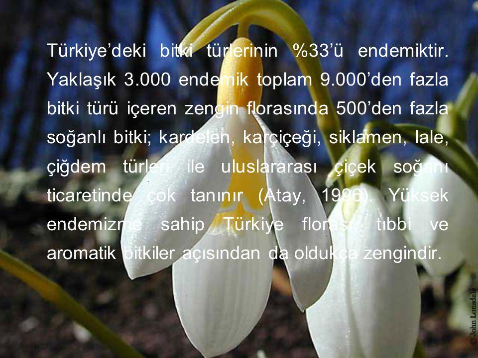 Türkiye'deki bitki türlerinin %33'ü endemiktir. Yaklaşık 3
