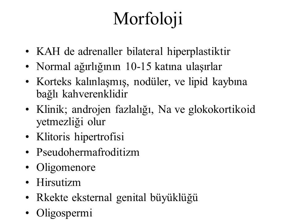 Morfoloji KAH de adrenaller bilateral hiperplastiktir