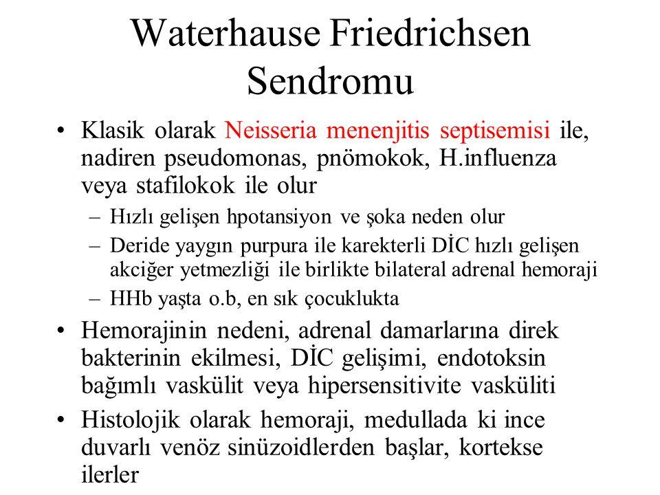 Waterhause Friedrichsen Sendromu