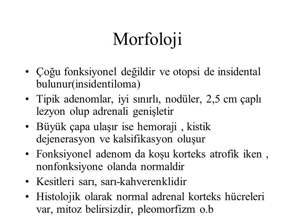 Morfoloji Çoğu fonksiyonel değildir ve otopsi de insidental bulunur(insidentiloma)