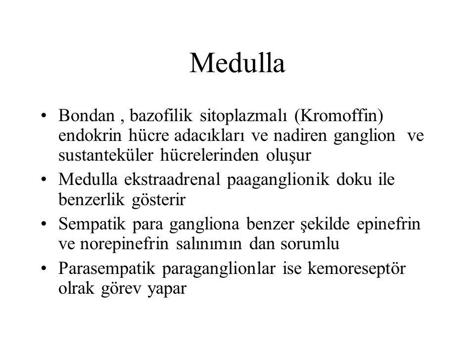 Medulla Bondan , bazofilik sitoplazmalı (Kromoffin) endokrin hücre adacıkları ve nadiren ganglion ve sustanteküler hücrelerinden oluşur.