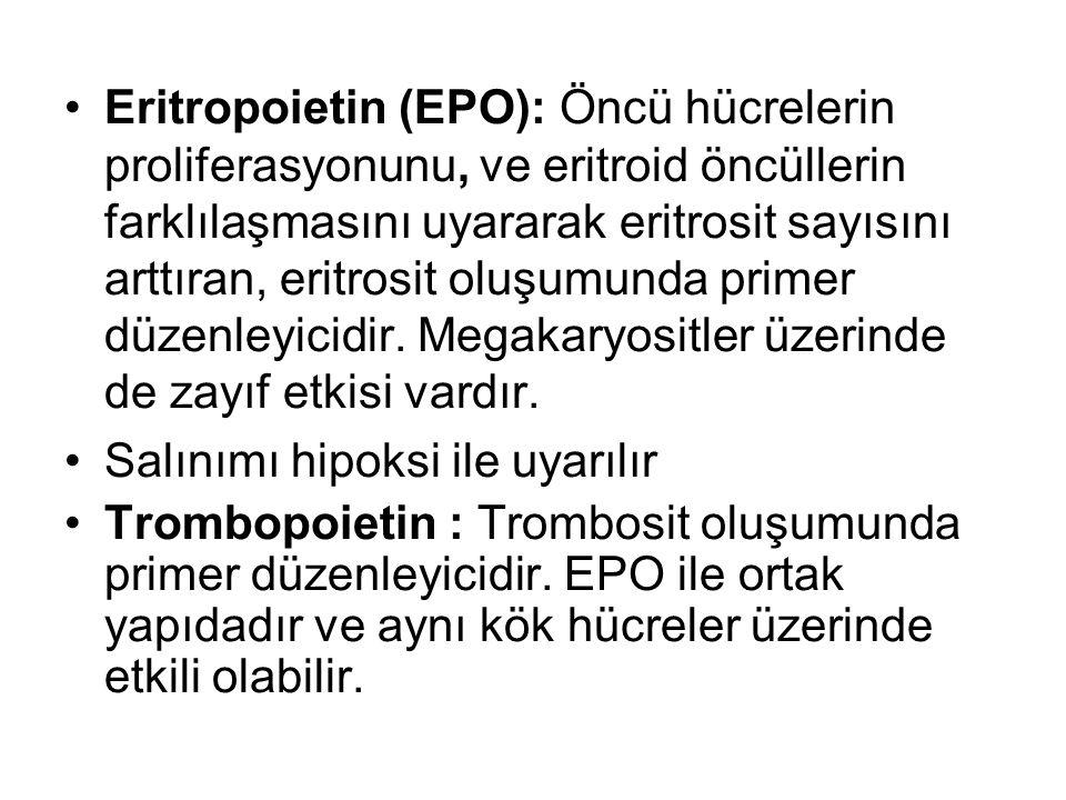 Eritropoietin (EPO): Öncü hücrelerin proliferasyonunu, ve eritroid öncüllerin farklılaşmasını uyararak eritrosit sayısını arttıran, eritrosit oluşumunda primer düzenleyicidir. Megakaryositler üzerinde de zayıf etkisi vardır.
