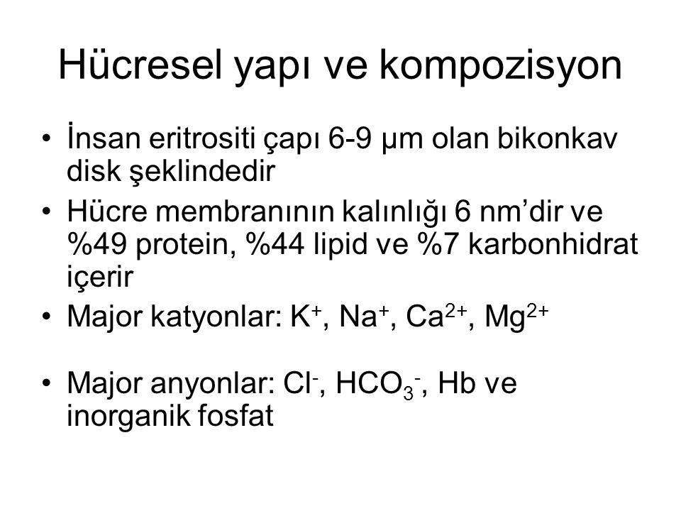 Hücresel yapı ve kompozisyon
