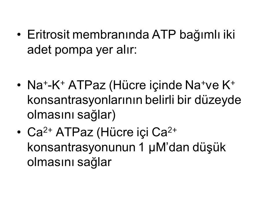 Eritrosit membranında ATP bağımlı iki adet pompa yer alır: