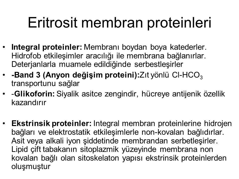 Eritrosit membran proteinleri