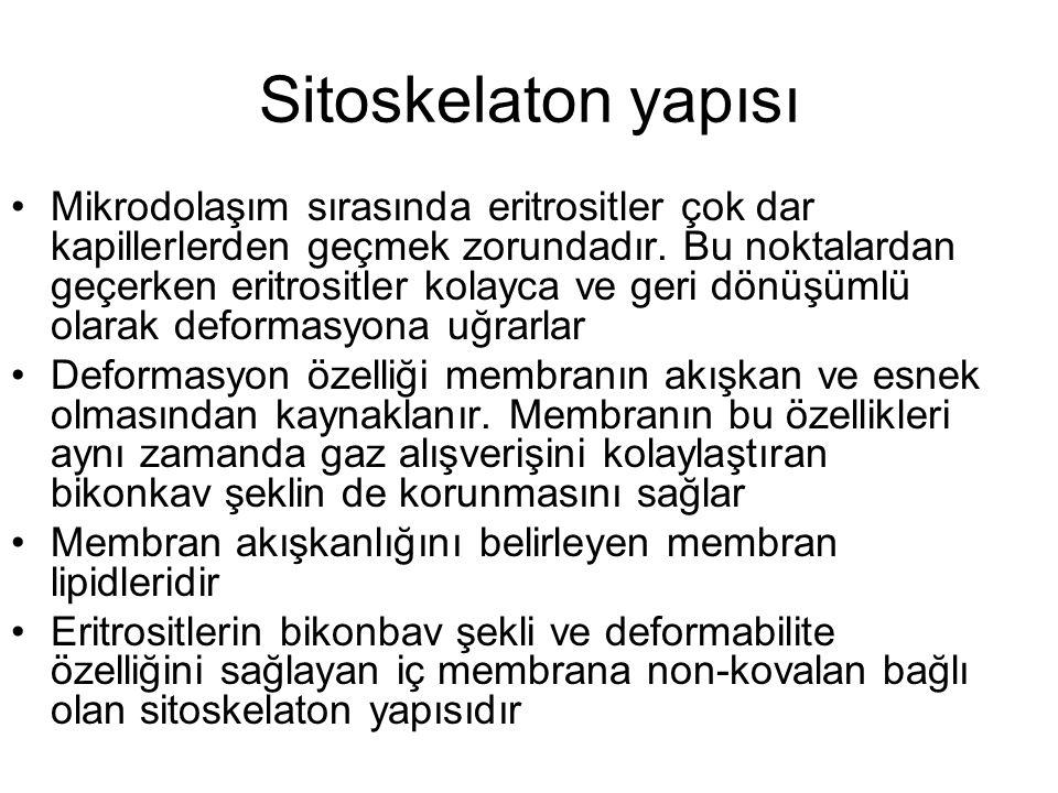 Sitoskelaton yapısı
