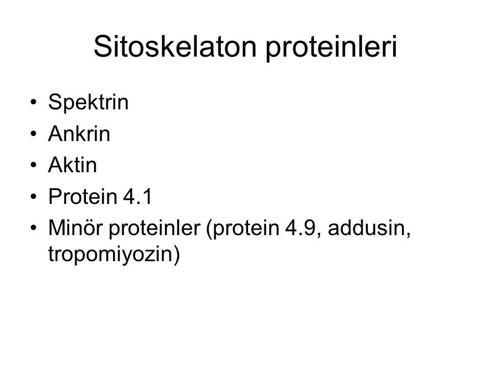 Sitoskelaton proteinleri