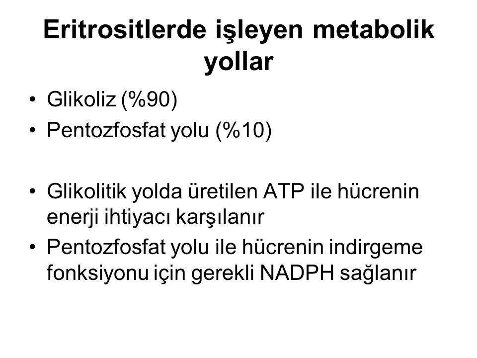 Eritrositlerde işleyen metabolik yollar