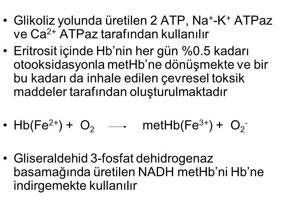 Glikoliz yolunda üretilen 2 ATP, Na+-K+ ATPaz ve Ca2+ ATPaz tarafından kullanılır