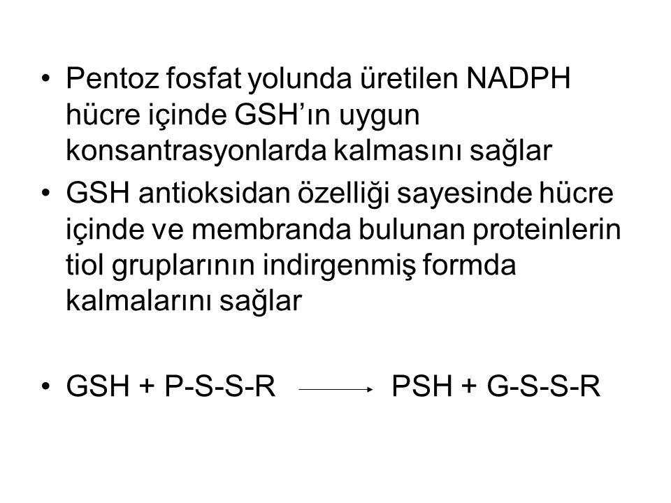Pentoz fosfat yolunda üretilen NADPH hücre içinde GSH'ın uygun konsantrasyonlarda kalmasını sağlar
