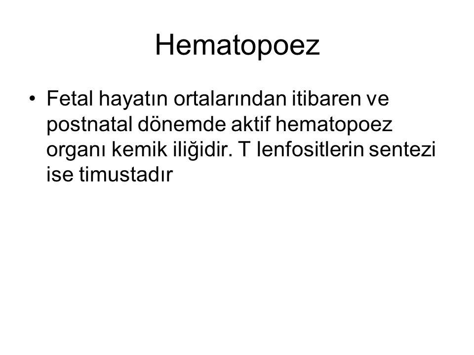 Hematopoez Fetal hayatın ortalarından itibaren ve postnatal dönemde aktif hematopoez organı kemik iliğidir.