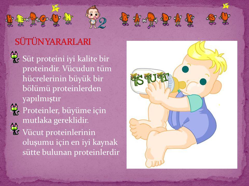 SÜTÜN YARARLARI Süt proteini iyi kalite bir proteindir. Vücudun tüm hücrelerinin büyük bir bölümü proteinlerden yapılmıştır.