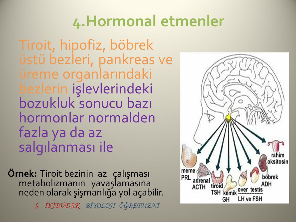 4.Hormonal etmenler